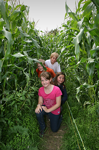 The Maize Maze